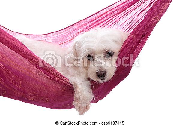 Pampered puppy lying in hammock - csp9137445