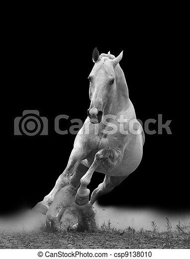 白色, 馬 - csp9138010