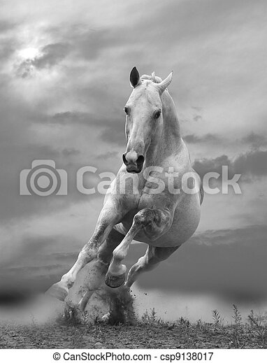 white horse in sunset - csp9138017