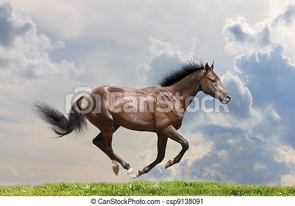 purebred horse - csp9138091