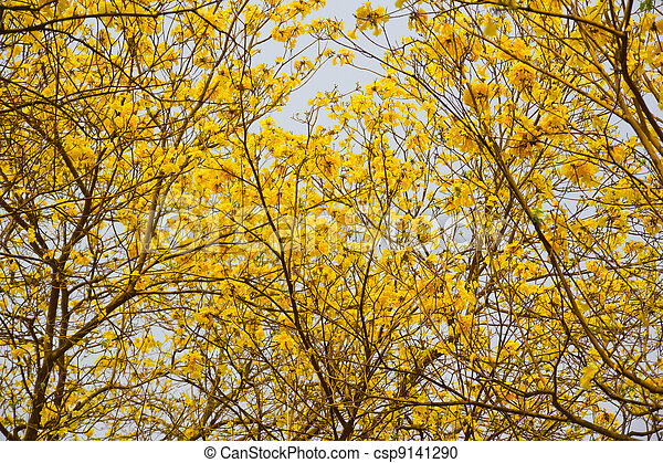 Arbre A Fleur Jaune Arbre 224 Fleurs Jaunes Liste Ooreka Photo