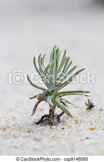 beach dune flora - csp9148593