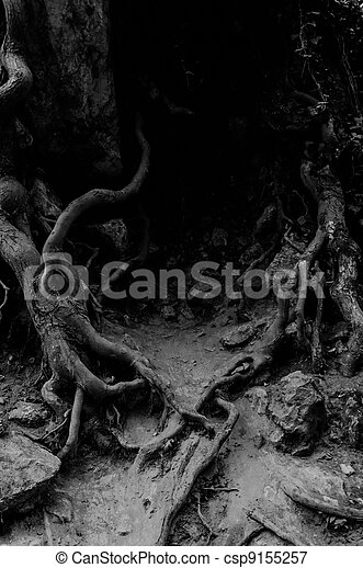 Roots of an ancient tree - csp9155257
