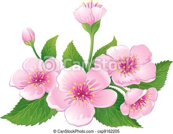 Cherry Blossom - csp9162205