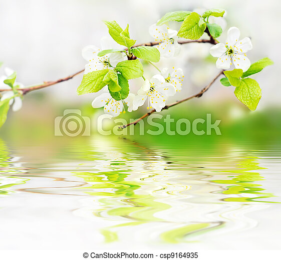 spring flowers on branch on water waves - csp9164935