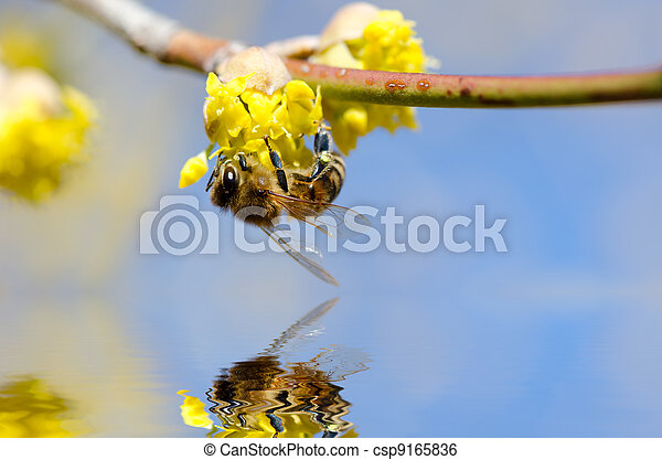 wasp collecting pollen - csp9165836