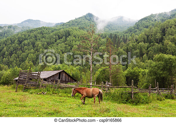 mountains landscape with horse. Altai, Siberia - csp9165866