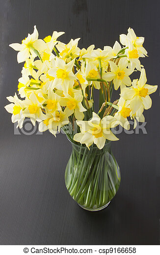Daffodils - csp9166658
