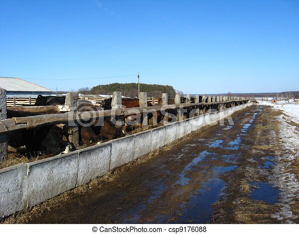 Cattle-breeding farm in the spring - csp9176088