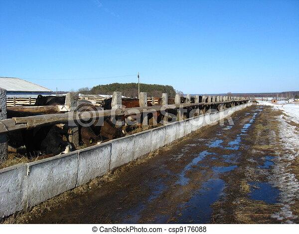 Cattle-breeding farm in the spring - csp9176088
