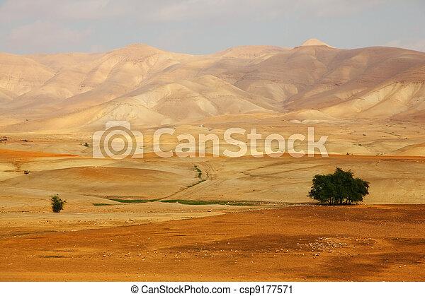 Desert Sinai in a  morning - csp9177571