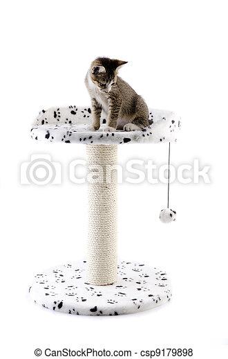 cat on cat tree  - csp9179898