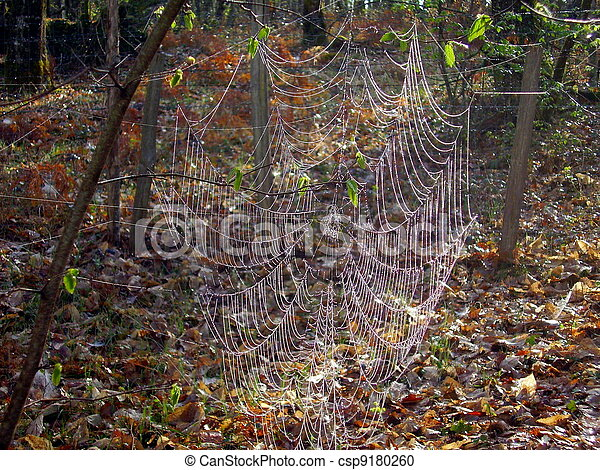 Giant web of European Garden Spider - csp9180260