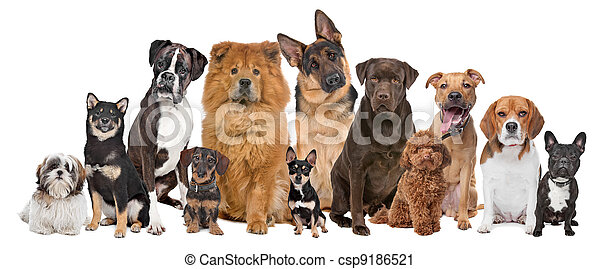Group of twelve dogs - csp9186521