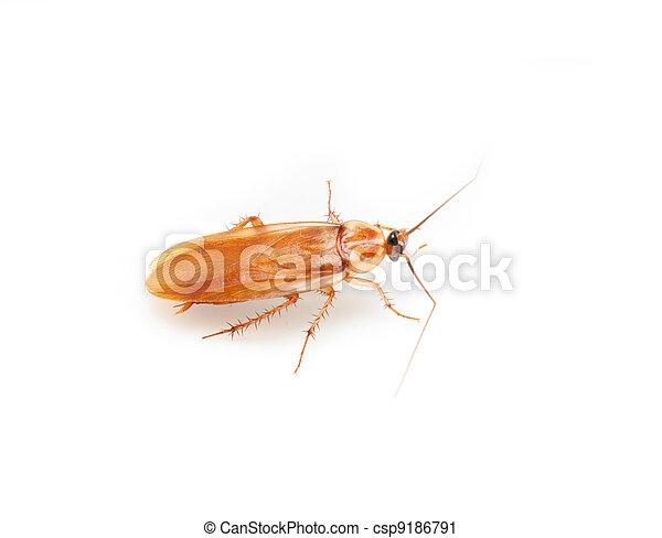 photographies de blanc cafard fond cafard sur a fond blanc csp9186791 recherchez des. Black Bedroom Furniture Sets. Home Design Ideas