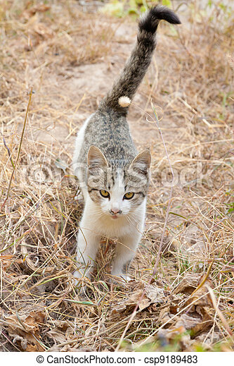 Cat on the nature - csp9189483