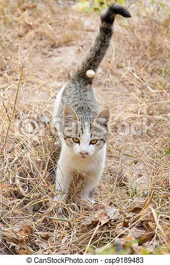 Cat on the nature - csp9189483