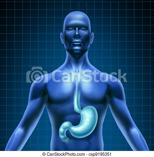 Stomach And Human Digestion - csp9195351