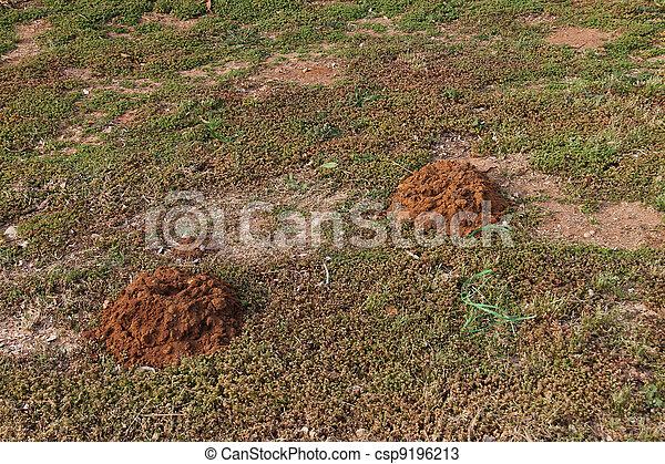 Mole hills - csp9196213