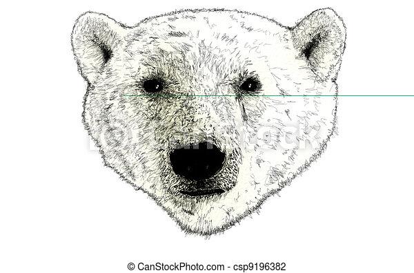 Head of a Polar Bear Illustration on White - csp9196382