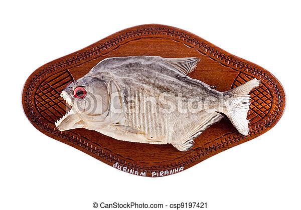troféu, peixe, madeira,  piranha - csp9197421