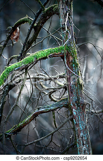 Pine tree with moss - csp9202654