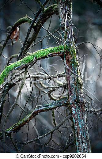 Pine tree with moss - csp9202654