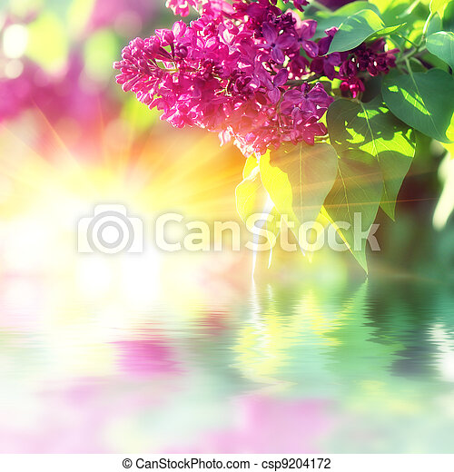 Blooming lilacs - csp9204172