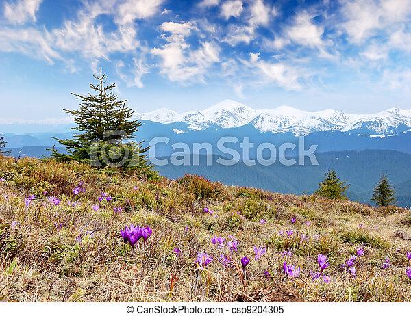 Fruehjahr, blume, himmelsgewölbe, landschaftsbild, bewölkt - csp9204305