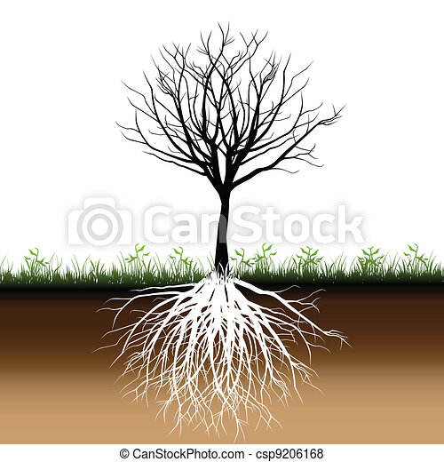 Tree roots silhouette - csp9206168