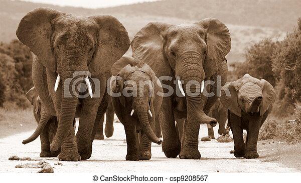 plaatje van een kudde olifanten monochroom sepia toon afbeelding csp9208567 zoek. Black Bedroom Furniture Sets. Home Design Ideas