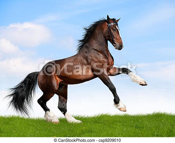Bay horse gallops in field. - csp9209010