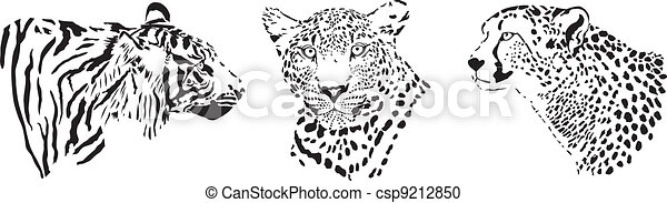 Head of cheetah, leopard and tiger - csp9212850
