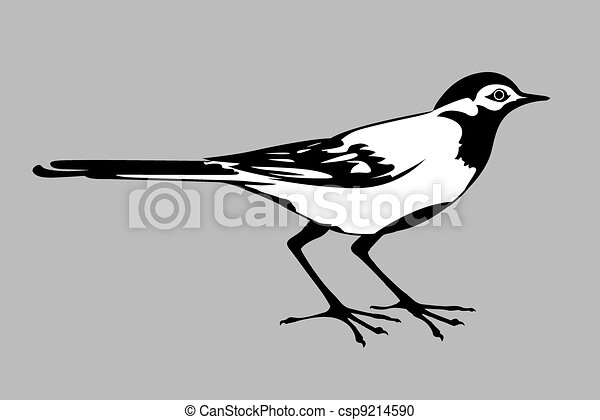 wagtail silhouette on gray background, - csp9214590