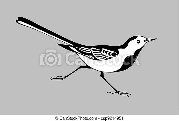 wagtail silhouette on gray  background, vector illustration - csp9214951