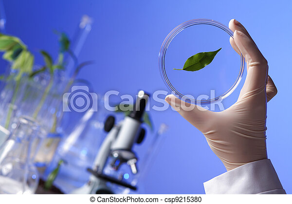 Green plants in biology laborotary - csp9215380