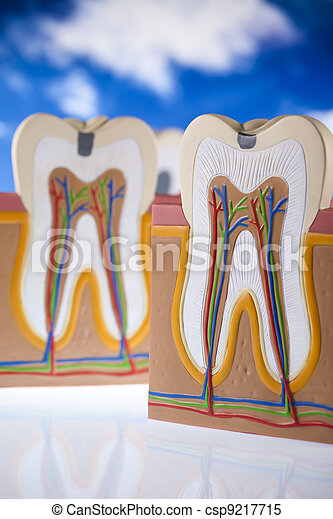 Human tooth structure - csp9217715