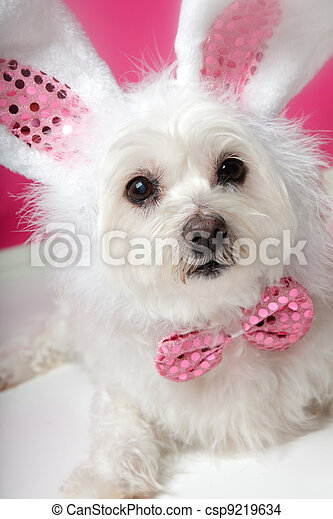 Pretty fluffy white dog in fancy bunny costume  - csp9219634