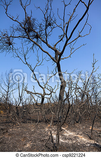 Remains of burned trees - csp9221224