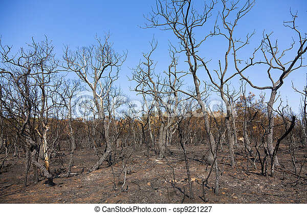 Remains of burned trees  - csp9221227
