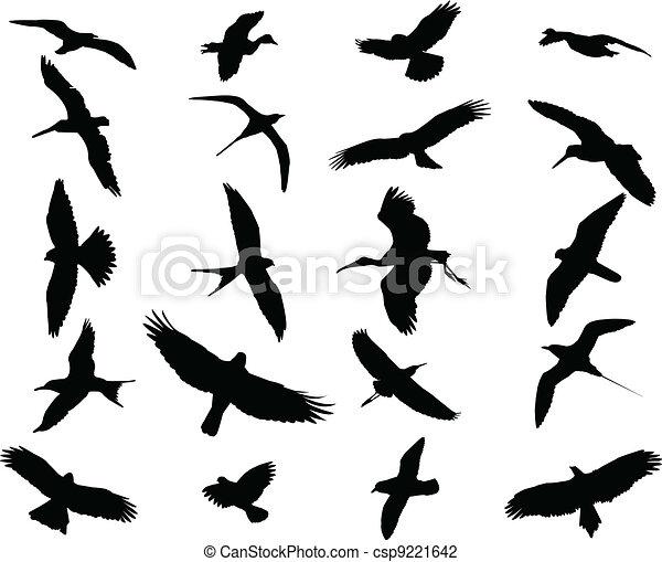 Birds collection - csp9221642