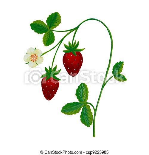 Archivio illustrazioni di fragola pianta grafica for Pianta di fragole