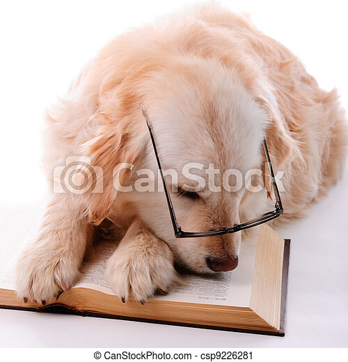 Golden retriever learning - csp9226281
