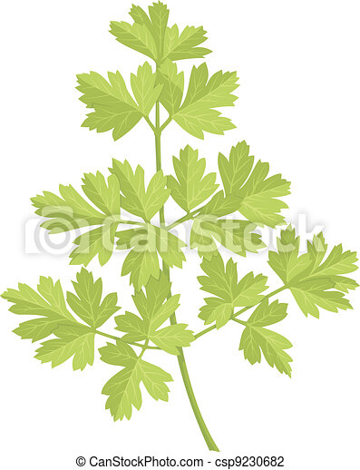 Parsley - csp9230682