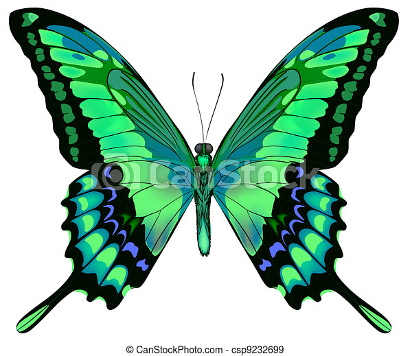 Vector illustration of beautiful blue green butterfly  isolated on white background  - csp9232699