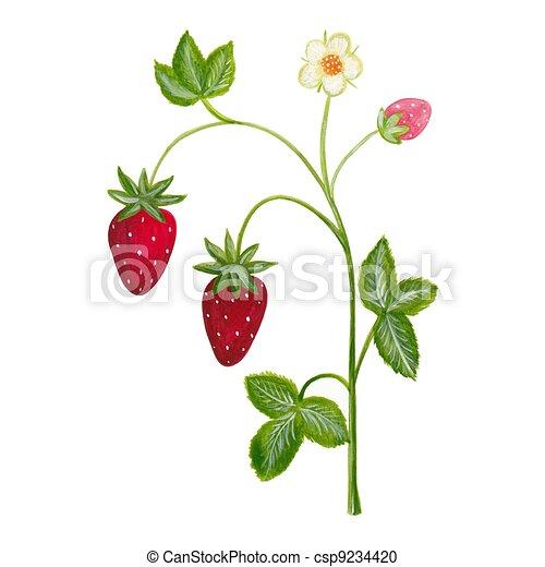 ... clipart, logo, art de la ligne, images, graphisme, graphiques, dessin Flower Vine Clipart