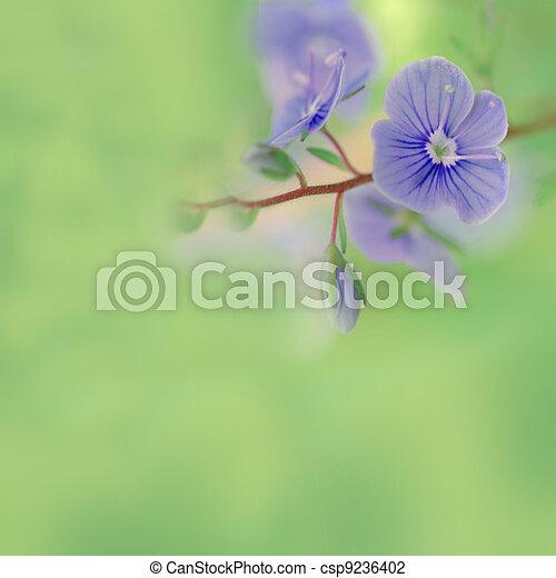 Meadow blue flowers - csp9236402