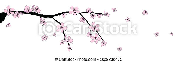 Branch of beautiful cherry blossom  - csp9238475