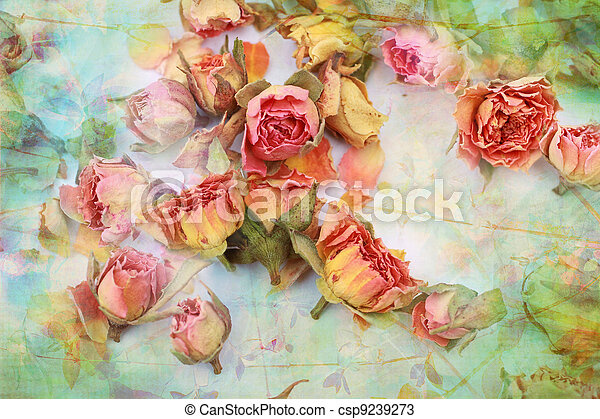 Dry roses beautiful vintage background  - csp9239273