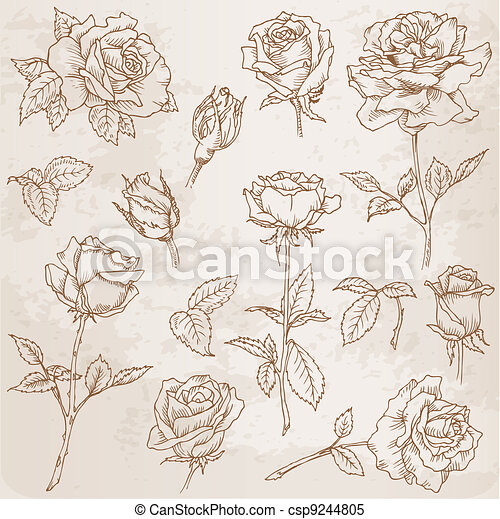 Flower Set: Detailed Hand Drawn Roses in vector - csp9244805